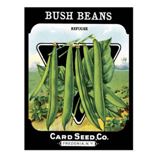 Bush Beans Seed Pack Vegetable Garden Black NY Postcard