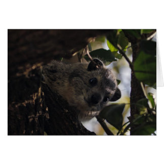 Bush Hyrax Card
