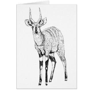 Bushbuck Antelope Birthday Card