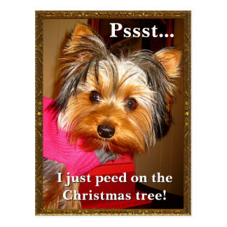Busted Yorkie Postcard