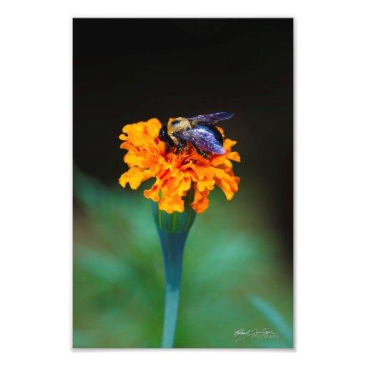 busy bee 2 art photo
