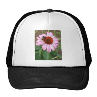 Busy Bee Mesh Hat