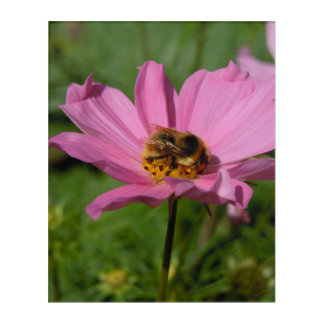 Busy Bee on Cosmo Acrylic Print