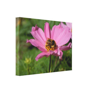 Busy Bee on Cosmo Canvas Print