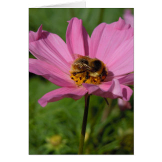 Busy Bee on Cosmo Greeting Card