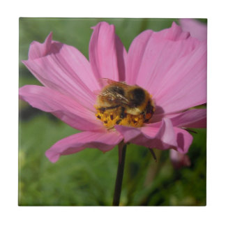 Busy Bee on Cosmo Ceramic Tile