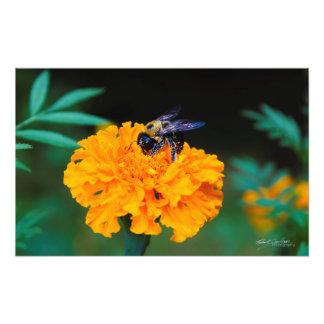 Busy Bee Photo Print