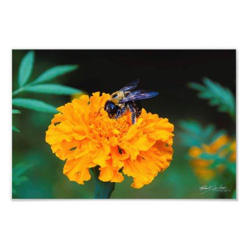 Busy Bee Photo