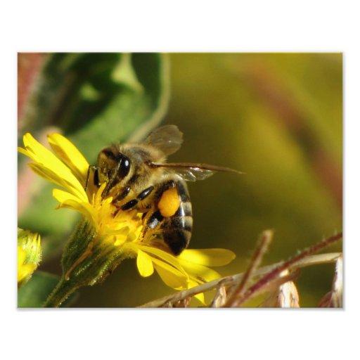 Busy Bee Photo Art