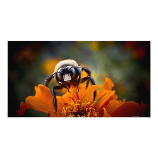 Busy Bee Print Gift Photograph