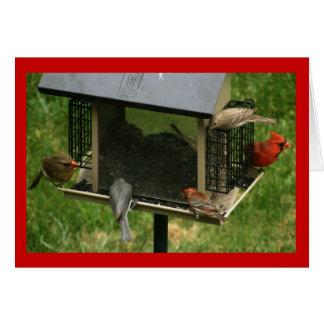 Busy Bird Feeder Card