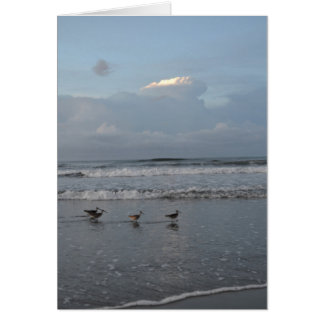 Busy Birds on the Beach Note Card