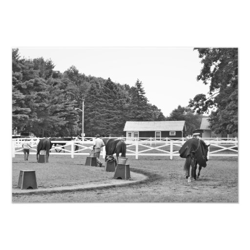 Busy Morning at the Phipps Barn Photo
