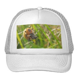 Busy Spider Cap
