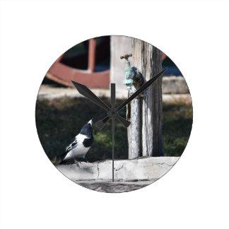 BUTCHER BIRD RURAL QUEENSLAND AUSTRALIA CLOCKS