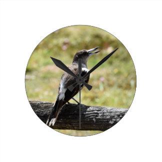 BUTCHER BIRD RURAL QUEENSLAND AUSTRALIA CLOCK