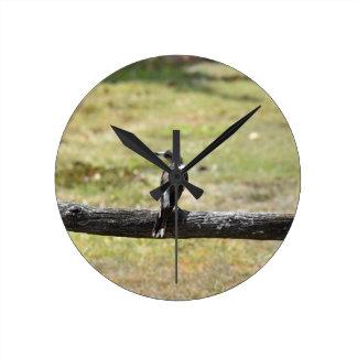 BUTCHER BIRD RURAL QUEENSLAND AUSTRALIA WALL CLOCK