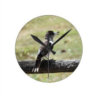 BUTCHER BIRD RURAL QUEENSLAND AUSTRALIA WALLCLOCKS