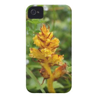 Butterbur broom (Orobanche flava) iPhone 4 Case-Mate Cases