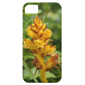 Butterbur broom (Orobanche flava) iPhone 5 Case