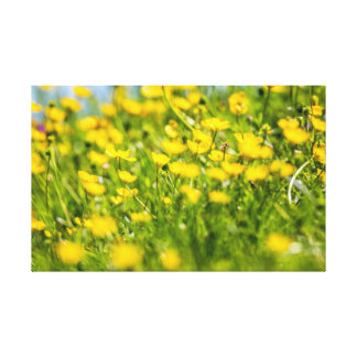 Buttercups in motion canvas print