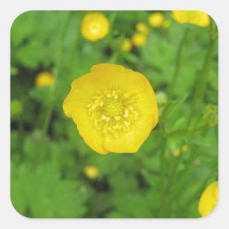 Buttercups Square Sticker