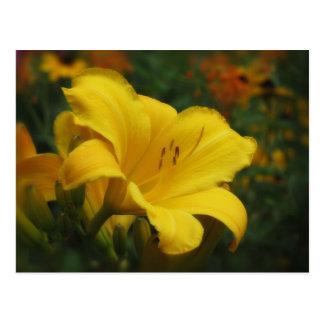 Buttered Popcorn Garden - Daylily Postcard