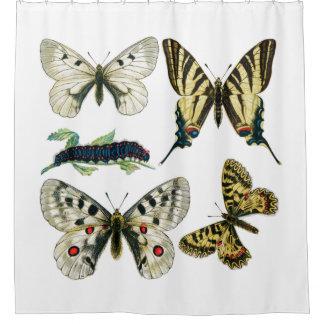 Butterflies and Moths Shower Curtain