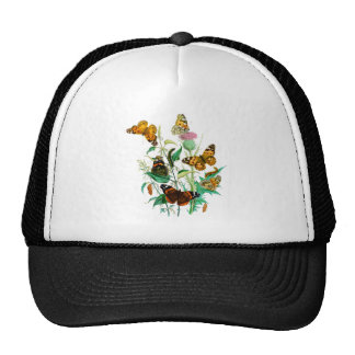 Butterflies and Thistle Cap