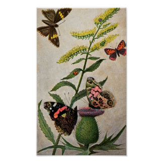 Butterflies and Thistle Poster