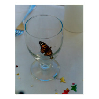 Butterflies are free postcard