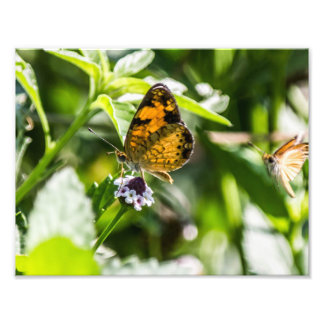 Butterflies Art Photo
