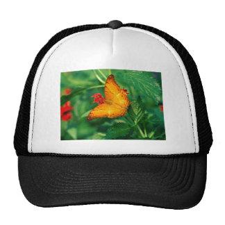 butterflies cruiser malaysia cap