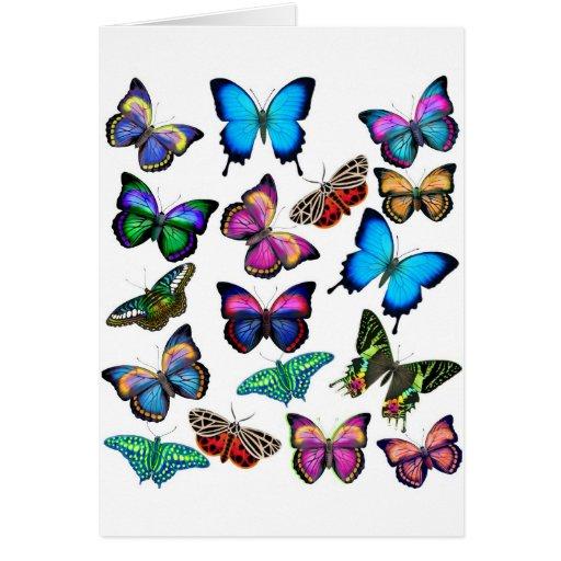Butterflies Fluttering By Greeting Card