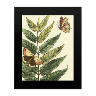 Butterflies & Leaves with Black Frame Acrylic Print
