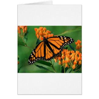 butterflies monarch butterfly card