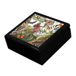 Butterflies Moths Animals Caterpillars Gift Box