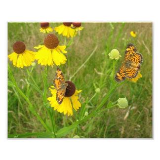 Butterflies, New England 8x10 photo