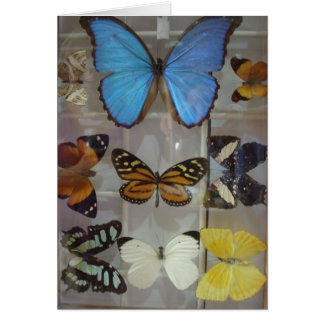 Butterflies of Panama Card