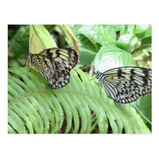 Butterflies on Fern  Postcard