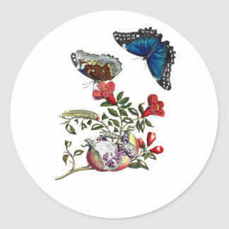 Butterflies on pomegranate classic round sticker