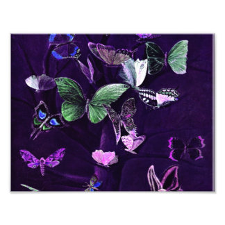 Butterflies On Purple Photo Print
