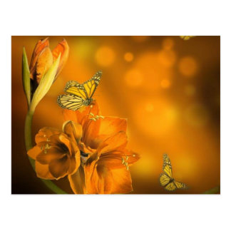 butterflies orange postcard