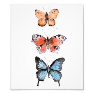 Butterflies Photo Print