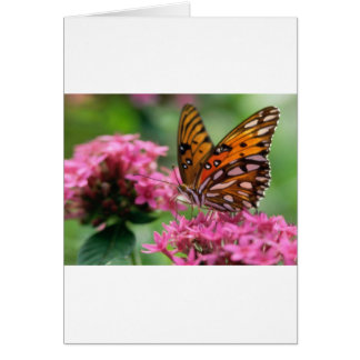 butterflies rounds social butterfly greeting card