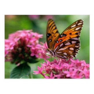 butterflies rounds social butterfly post card