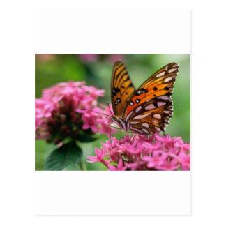 butterflies rounds social butterfly postcard