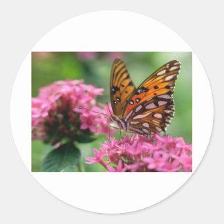 butterflies rounds social butterfly sticker
