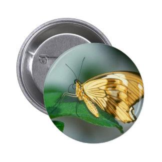 butterflies swallow tail butterfly pinback buttons