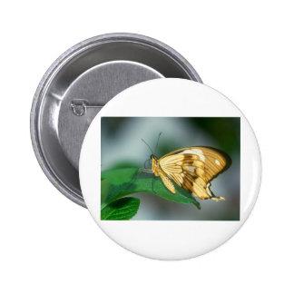 butterflies swallow tail butterfly buttons